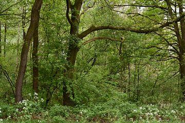 Bäume, Büsche, Zweige von Monique Pulles