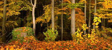 Im Laubwald von Denis Feiner