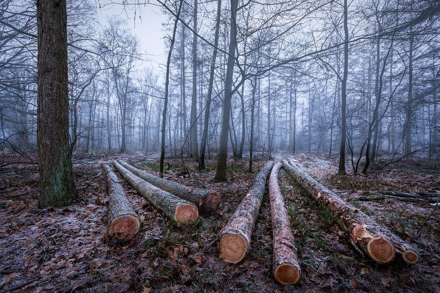 Firewood van Mario Visser