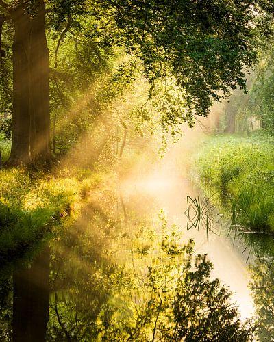 Zonsopkomst met spiegeling van de bomen in het water, Utrechtse Heuvelrug, Nederland
