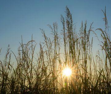 Sommersonne von A'da de Bruin