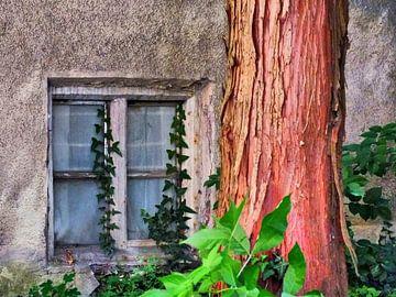 Fenster 02 von Ilona Picha-Höberth
