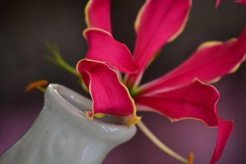 Kakefonie van roze, rood en een tikkeltje geel. van Eef Gijsbers Eijndhoven