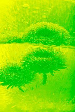 Bellis mit Spiegelung in Grün von Marc Heiligenstein