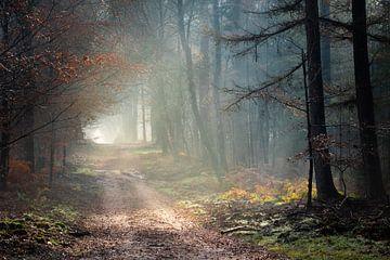 DER MORGEN IST ANGEBROCHEN von Algon Photography