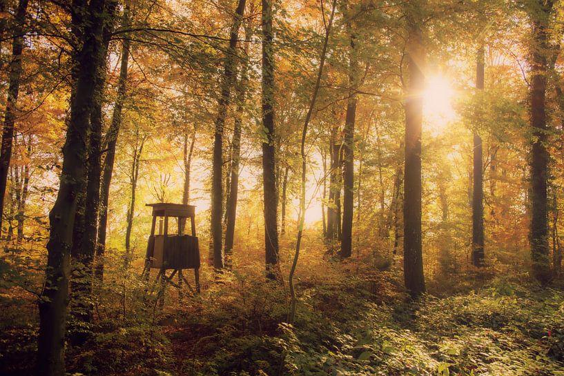 Jäger Stuhl im Herbstwald von Tanja Riedel
