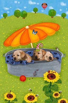 Mes drôles de chiens Tim, Tom et Teddy sur Marion Krätschmer