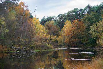 Prachtige herfstkleuren aan het Witven te Oisterijk von Douwe Bergsma