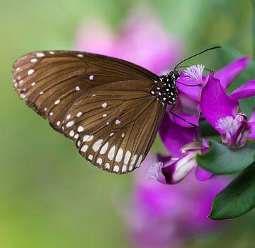 Oleander Vlinder van Ingrid Ronde