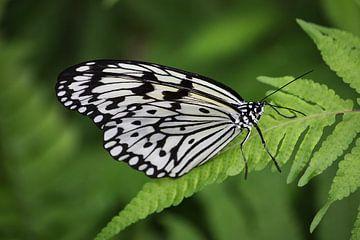 Schmetterling von Tesstbeeld Fotografie