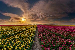 Tulpen op Texel - Mixed van Texel360Fotografie Richard Heerschap