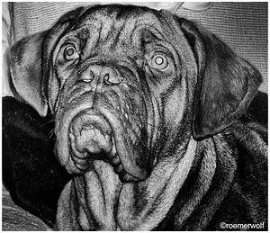DOG von Harry Roemeling