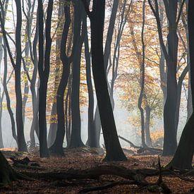Dansende bomen in Speulderbos van Barbara Brolsma