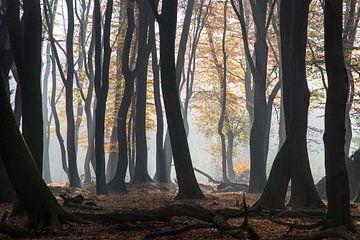 Les arbres dansants sur Barbara Brolsma
