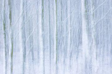 Winterwald von Martzen Fotografie