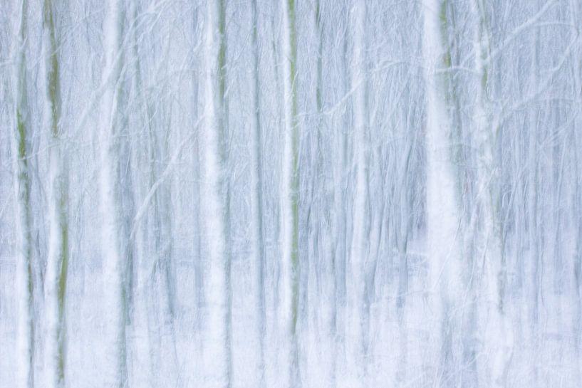 Winterforest sur Martzen Fotografie