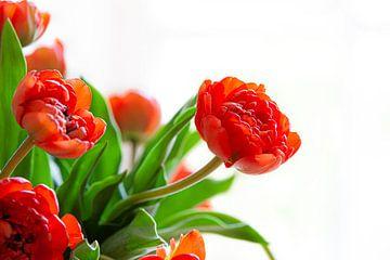 La Tulip 2 sur Nanouk el Gamal - Wijchers (Photonook)