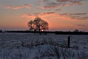 Winter II van Marco van de Pol