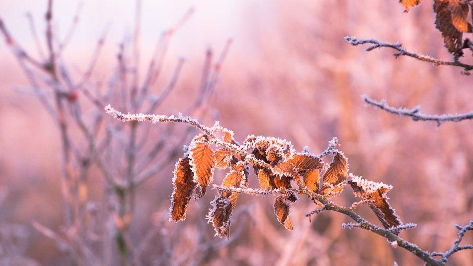 Ruige rijp bij zonsopkomst van Wilbert Tintel