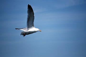 In vogelvlucht van Max van Boxel