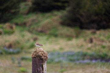 Kleiner Vogel in großer Landschaft von Annelies Huijzer