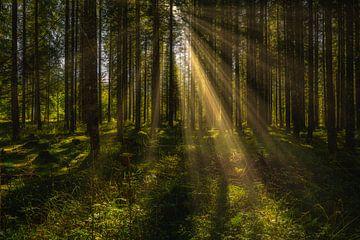 Sonnenstrahlen im Herbstwald von PhotoArt Thomas Klee