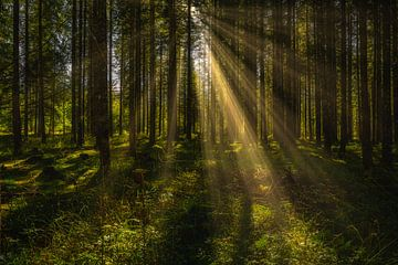 Zonnestralen in het herfstbos van PhotoArt Thomas Klee