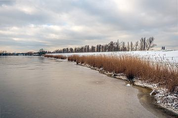 Vergeeld riet langs bevroren meer