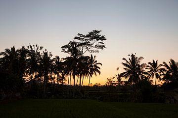 Kokospalmen en prachtige oranje zonsondergang creëren een rustgevend avondlandschap van