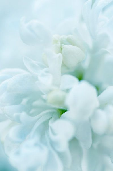 Witte bloesem van Anouschka Hendriks