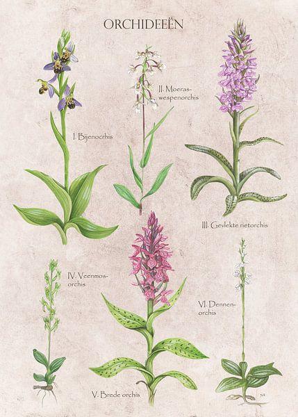Orchideeën van Jasper de Ruiter