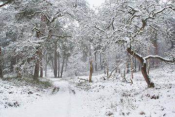 Sneeuw op de Veluwe van Cor de Hamer