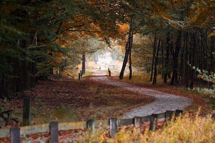 Herfst in de Holterberg van Frenk Volt