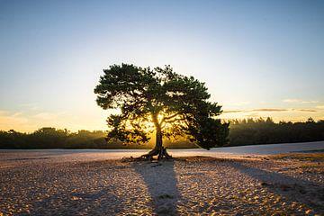 Eenzame boom van Richard Nell