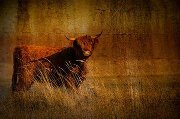 Schottischer Highlander von Anita Loos