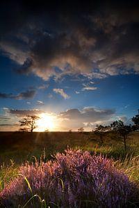 Sun shining over the heather