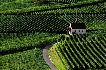 Kapel in de wijngaarden van Jürgen Wiesler