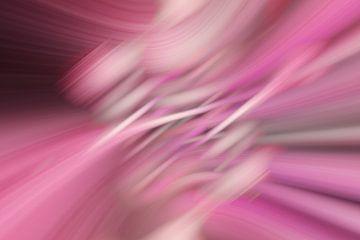 rosa van Dagmar Marina