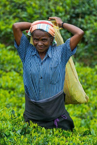 Theeplukster in Sri Lanka van Lifelicious