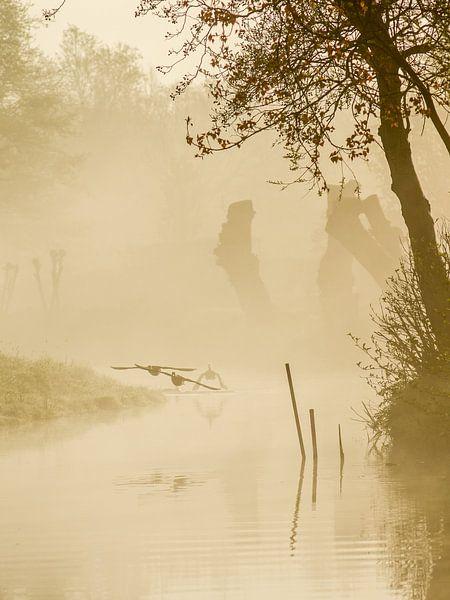 birds in the mist van Dirk van Egmond