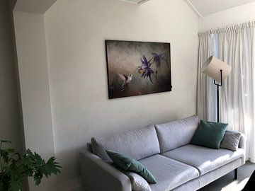 Klantfoto: Vliegende Kolibrie Vogel met Paarse Akelei Bloem van Diana van Tankeren
