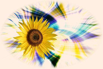 Zonnebloembloesem ( Helianthus annuus ) voor een kleurrijke, artistiek abstracte achtergrond van Harry Adam