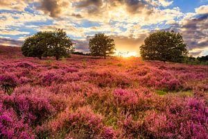 Posbank - Purple Sunset