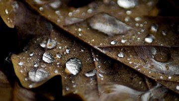Herfst blad van Masselink Portfolio