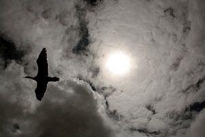 Zon in vleugels van