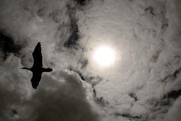 Zon in vleugels van Liane Dhyana Pagie