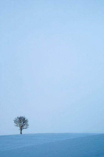 Boom in de sneeuw van Douwe Schut
