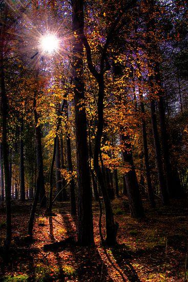 Herfst van Harrie Muis
