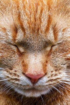 Kattenkop, slaapkop. Zoals alleen een kat dat kan. Rode kater. van Jani Moerlands