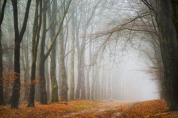 Hoog Buurlose bos sur Frederik van der Veer